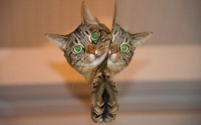 วิธีเลี้ยงแมวตัวน้อย 7 การดูแลให้มีสุขภาพแข็งแรง